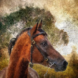 Arabian horse portrait. Simulation in old painting style