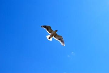 大空へ羽ばたく