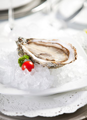 Oysters on ice, small dof