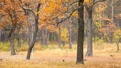 Осенний лес. Падающие листья