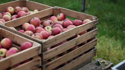 Kisten mit Äpfel