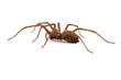 Leinwanddruck Bild - Nahaufnahme einer Spinne (freigestellt)
