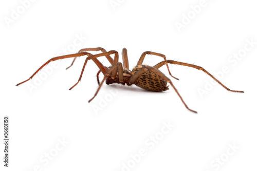 Leinwanddruck Bild Nahaufnahme einer Spinne (freigestellt)