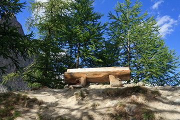 panchina tra alberi - bench on the wood