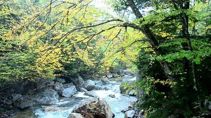 Cascading brook in Northern New Hampshire