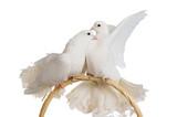 Fototapete Hochzeitlich - Taube - Vögel