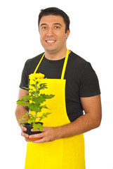Male gardener holding chrysanthemum