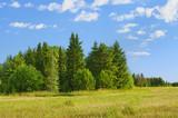 Fototapeta pole - świerk - Dziki pejzaż