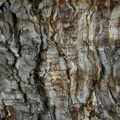 Nahaufnahme von Baumrinde