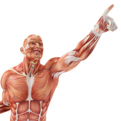muscle man pointing to the sky