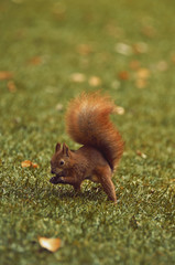 squirrel-Warsaw