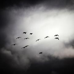 Caerlaverock Sky2
