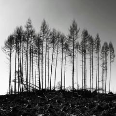 Galloway-Forest-survivors