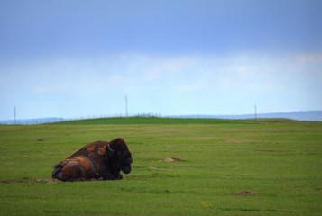 Bison-Land