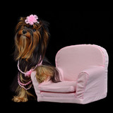 Glamour Yorkie dog among pink items