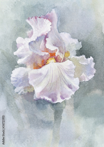 Watercolor Flower Collection: Iris - 36723913