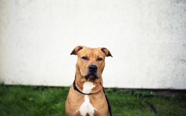 The-dog