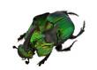 Rainbow Scarabs - Phanaeus demon