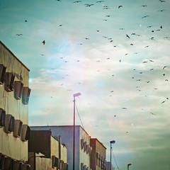 La-revolution-des-Oiseaux