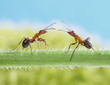 two ants, greetings on grass