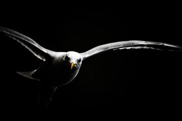 Gull-III