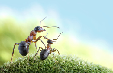 ants, on child care