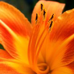 orange-glow-I