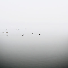ducks-in-the-fog