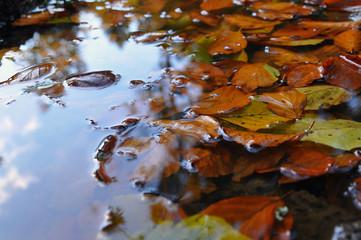 fall-fall-fall