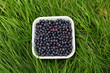 Blueberries freshly picked in the grass