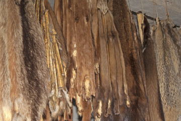 Furs hanging on a Rack