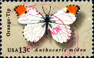 Anthocaris Midea. Butterfly. US Postage.