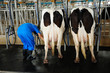 Milking production