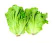 lettuce growing in the soil .