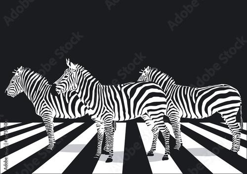 zebry-na-przejscia-dla-pieszych