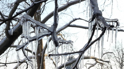 Ice on a frozen tree