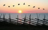 Bird Formation in Sunset