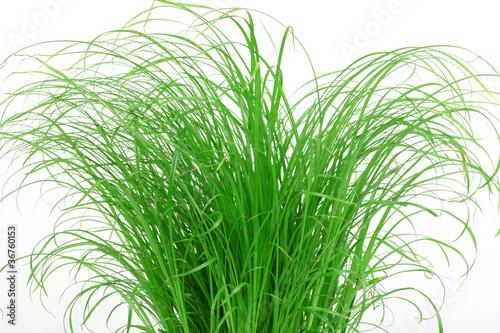 Gras für Katzen