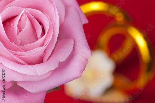 Róża i obrączki