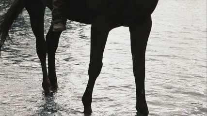 leg of horse in river water