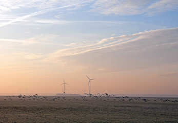 Birds flying at dawn, Holland, Europe