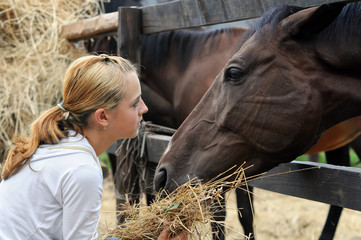 girl feeding horses in the farm