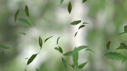 Weed leaves falling