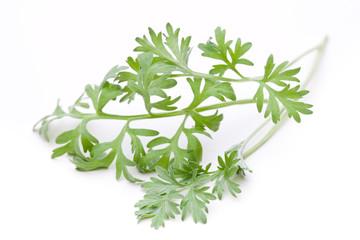 (Artemisia absinthum) Ein Stück Wermut