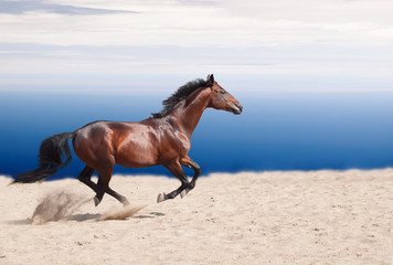 cantering bay stallion on the sand at sky background