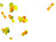 Detaily fotografie libellules