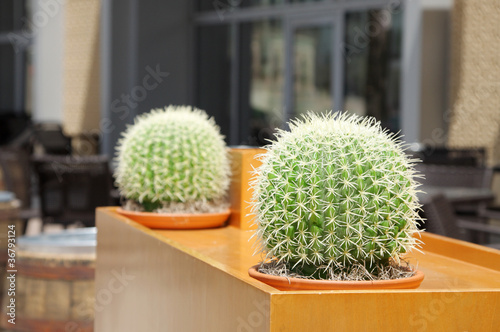 Artificial Barrel cactus