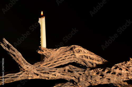 Candle and Cholla