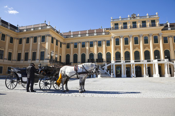 horse coach and a coachman in front of schonbrunn palace