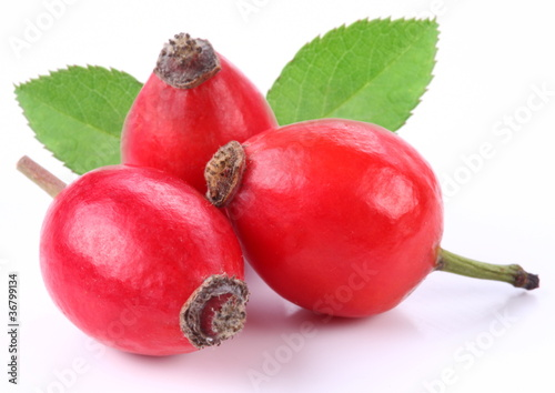 Group of rose hips.